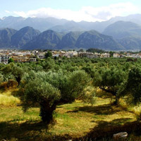 THE FINEST OLIVE TREES OF CRETE
