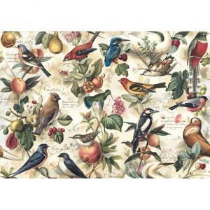 Χαρτί - Birds- 70x100cm