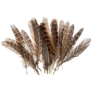 Φτερά 24 τεμαχίων καφέ ριγέ