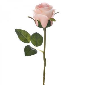 Κλαδί τριαντάφυλλο 50 εκατοστά