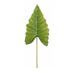 Φιλόδενδρο 51 εκατοστά