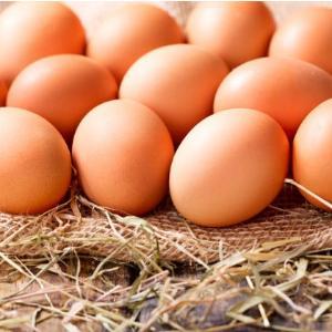 Αυγά Ορνιθοτροφείου