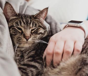 Οι γάτες αγαπούν τους ανθρώπους τους.
